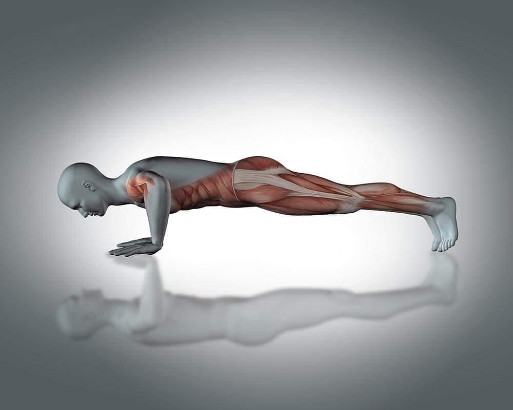 military pushups vs standard pushups