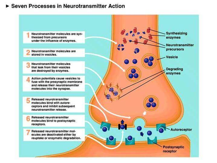 Independent Neurotransmitters