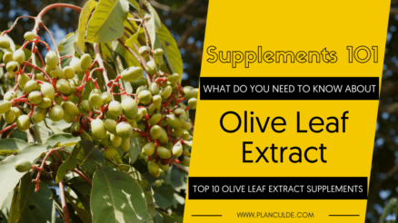TOP 10 OLIVE LEAF EXTRACT SUPPLEMENTS