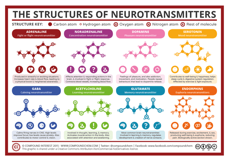 The Structures Of Neutrotransmitters
