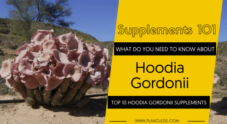 TOP 10 HOODIA GORDONII SUPPLEMENTS